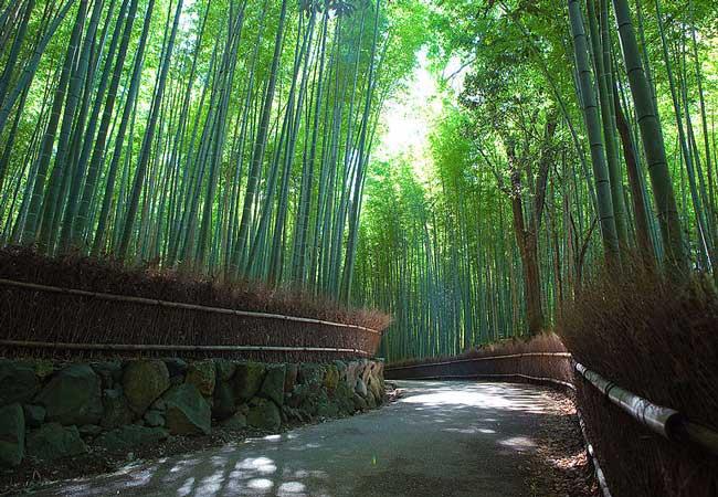 The Arashiyama Bamboo Grove.