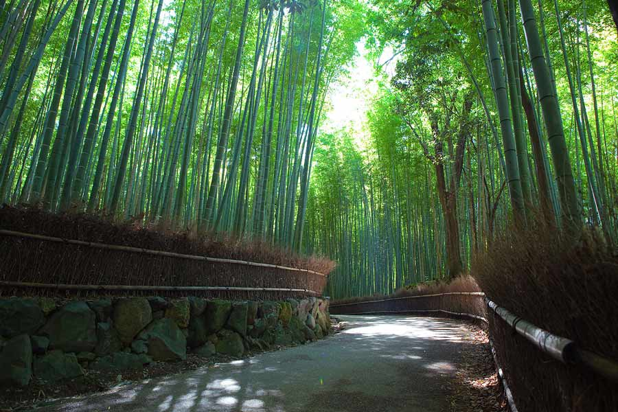 Things to do in Kyoto: Arashiyama bamboo forest.