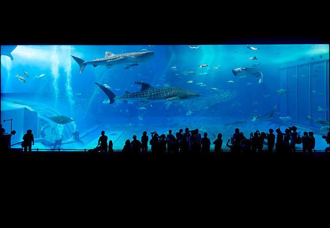 Things to do in Okinawa: Visit the Churami Aquarium