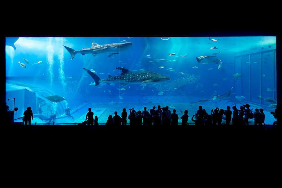 The Churami Aquarium