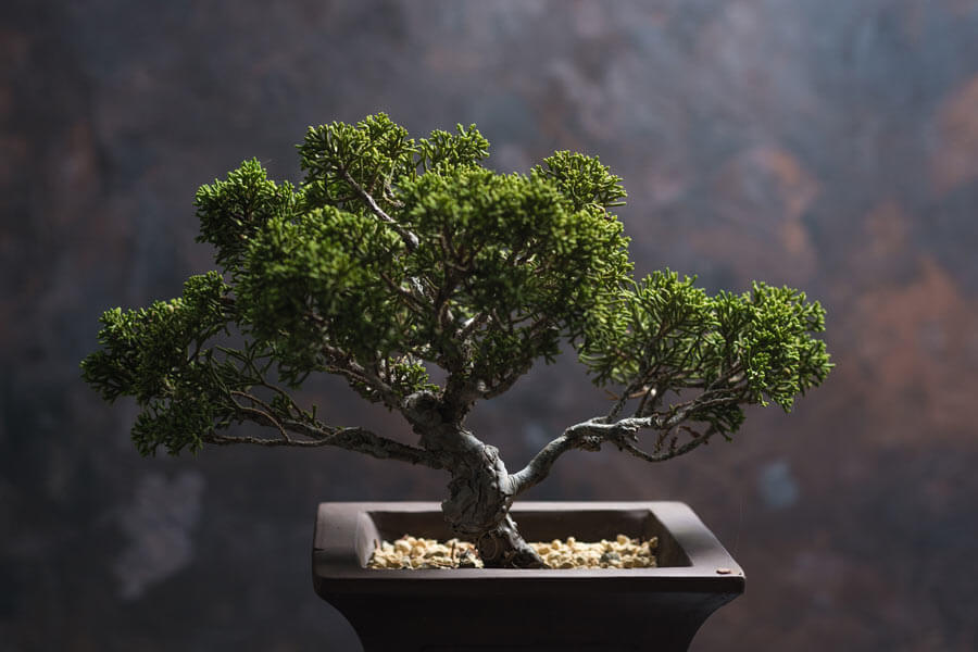 Bonsai tools and supplies