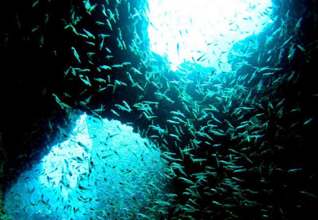 Okinawa dive spots: The Manza Dream Hole