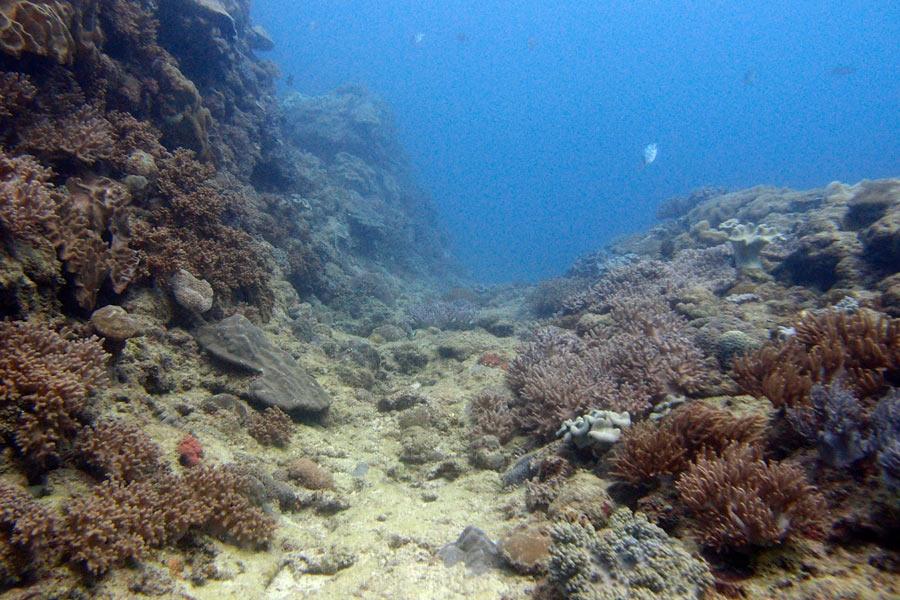 Okinawa diving at the Sunabe Seawall