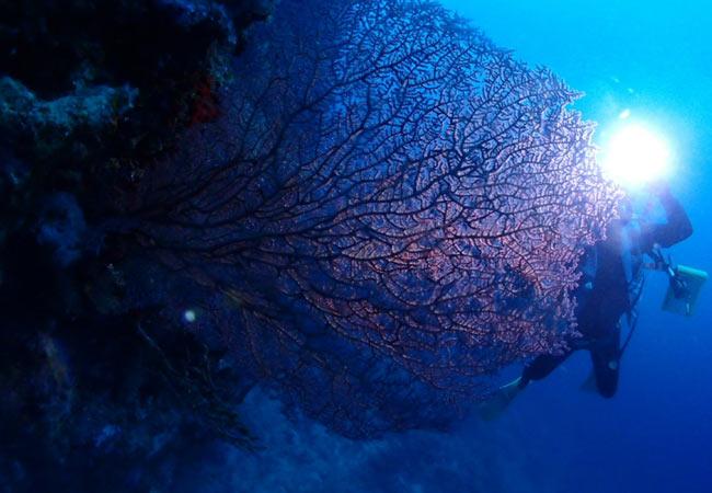 Okinawa diving spots: Dream Hole
