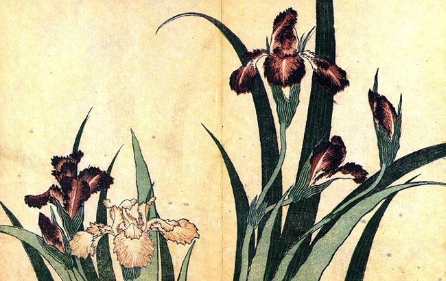 Irises by Katsushika Hokusai