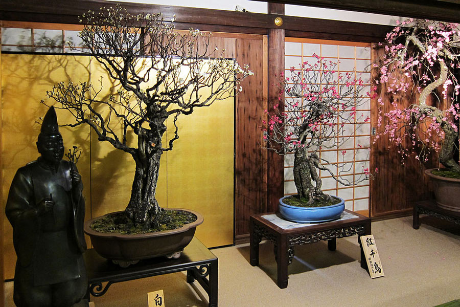 Bonsai exhibitions: Shunga-ten