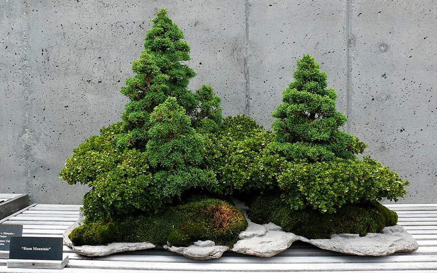 Bonsai trees.