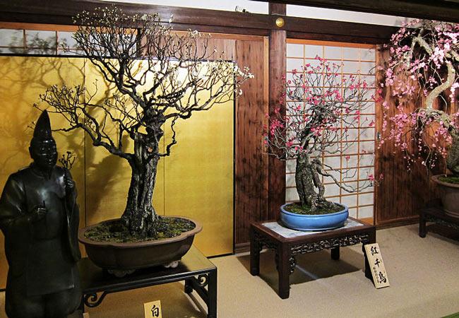 Bonsai exhibitions: Shunga-ten