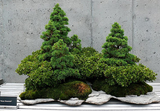 Bonsai Exhibitions in Japan