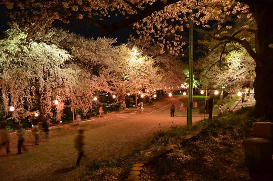 Motobu Yaedake Cherry Blossom Festival