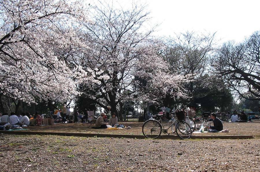 Naha Chura Cherry Blossom Festival