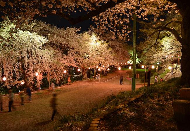 Okinawa cherry blossom festival