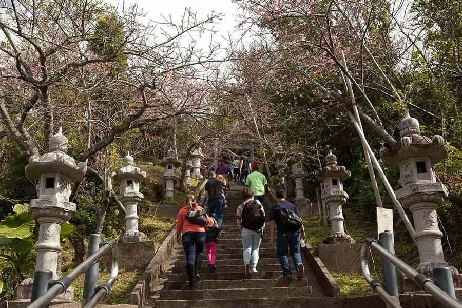 Nago Castle Park Cherry Blossom Festival