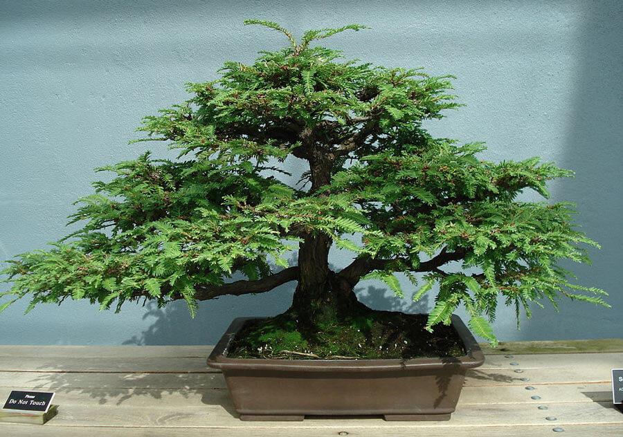 Informal upright bonsai style