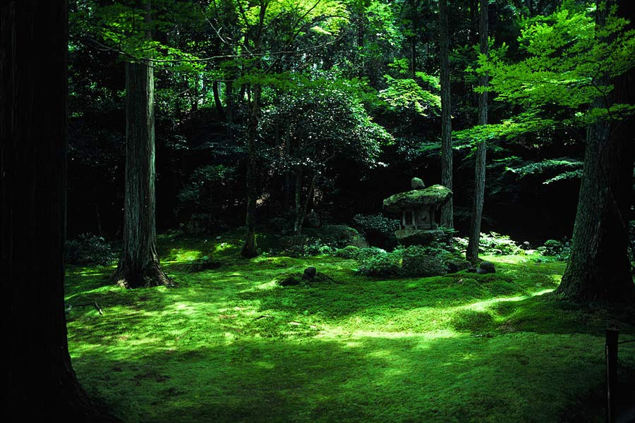 Japanese temple garden.