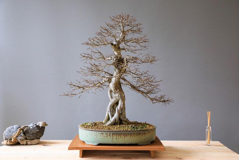 A guide to Japanese bonsai pots